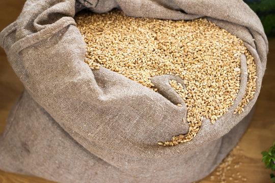 Linen bag full of wheat grains