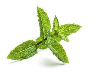Peppermint leaves isolated on white background