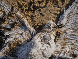 Tote Möwe an Angelschnur verendet - Dead gull dead on fishing line