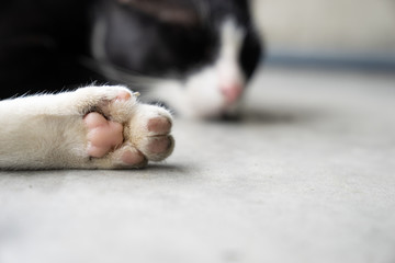 close up white cat's leg with pink paw, sleeping cat on cement ground