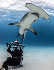 Diver recording hammerhead shark