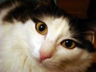 Portrait of a surprised cat close-up