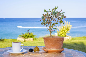 Daylight view to cup of coffee on table with olive tree