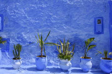 Line of green plant on a blue wall