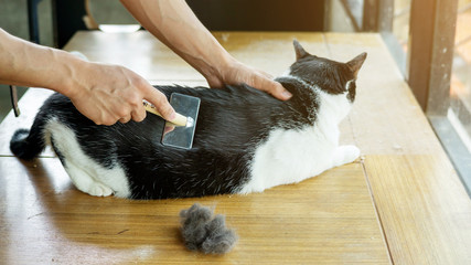 Men brushing a hair of a black and white cat.