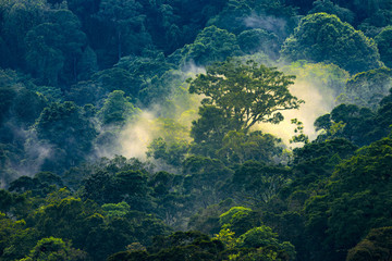 Deurstickers Jungle Magical sunrise in jungle
