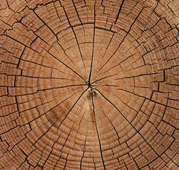Jahresringe eines Baumstamms