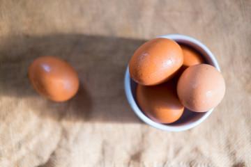 Close of fresh chicken egg