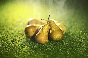 organic pears with misty water placed on the grass with depth of field
