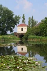 Wörlitzer Park, See, Seerosen