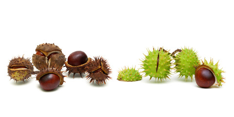 Mature chestnuts isolated on white background