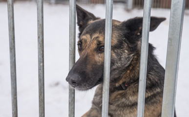 Abandoned dog in the kennel