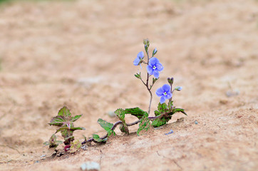 Dry summer. Flower in the desert. An oasis in the desert. Drought. Global warming. Climate change.