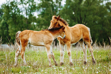 two baby foals are playing on a field