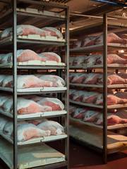 Raw ham during the salting process inside a refrigeration cell.