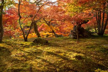 Garden Poster Honey 京都 永観堂の紅葉