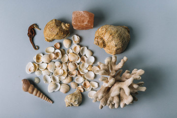 seashells, sea horse, coral on a gray background, flatplay. texture of seashells. place for text
