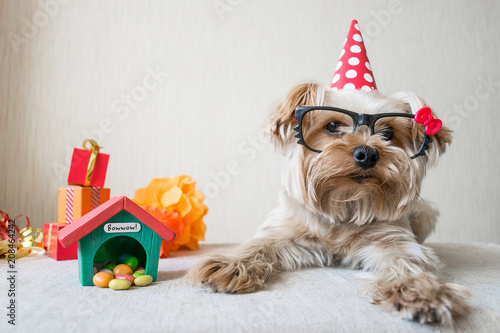 Funny Cute Yorkshire Terrier Yorkie Dog In Carnival Glasses And