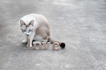 """Wooden letters word """"LOVE"""" on concrete floor and cat looking this Wooden alphabets & Words love text in nature garden.Use for Valentine day concept background.Copy space."""