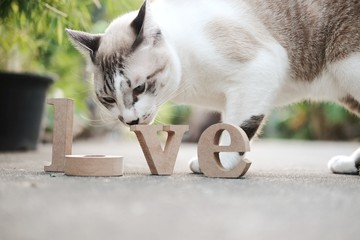 "Wooden letters word ""LOVE"" on concrete floor and cat looking this Wooden alphabets & Words love text in nature garden.Use for Valentine day concept background.Copy space."