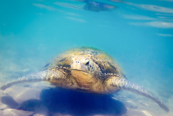 Turtle at Hikkaduwa beach