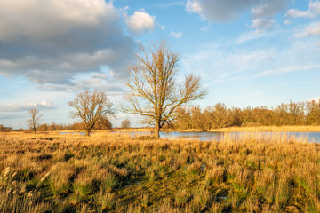 Dutch nature reserve during sunset