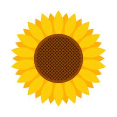 Sunflower icon - Vector