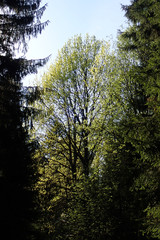 Bright green colors of spring