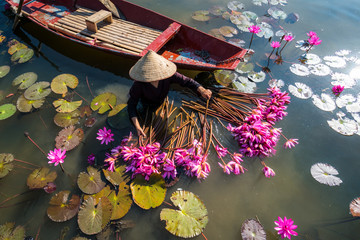 Photo sur Plexiglas Nénuphars Yen river with rowing boat harvesting waterlily in Ninh Binh, Vietnam