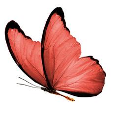 Большая бабочка с красными крыльями изолирована на белом фоне