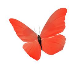 Большая бабочка с большими оранжевыми крыльями, изолирована на белом фоне