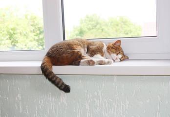 Cat on the window sill