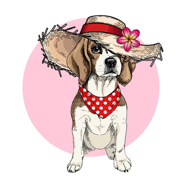 Vector portrait of beagle dog wearing straw hat, flower and polka dot bandana. Summer fashion cartoon illustration. Hand drawn pet portait. Poster, t-shirt print, holiday, postcard, summertime