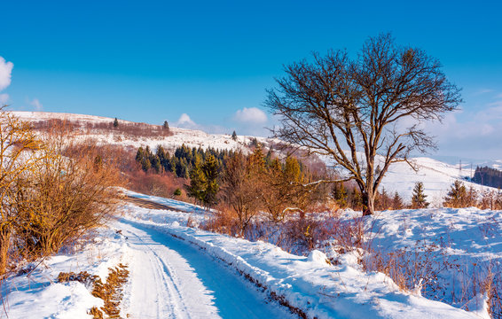tree along the road through snowy hillside. lovely winter forenoon in mountains. spruce forest in the distance