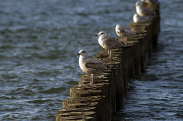 Möwen an der Ostsee