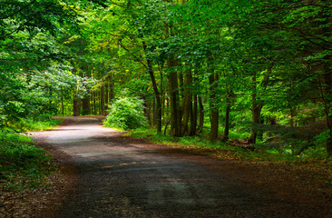 spot of light on winding forest road. lovely nature scenery in summer. beautiful ancient beech forest