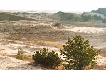 sand dunes at sunset, landscape sand hills in the sunlight