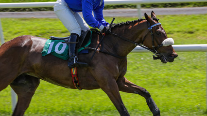 close up on running race horse