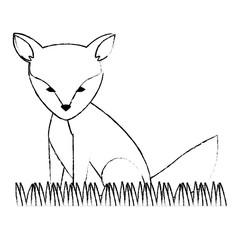 wild canadian fox animal vector illustration design