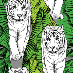 Seamless pattern with image of a white tiger walking in green banana leaves. Vector illustration.