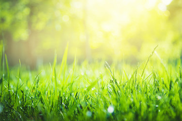 Green grass background with copy space. Summer nature landscape Fototapete