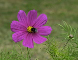 Natural flowers in garden