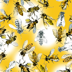 Honey, summer, country, wild bees. Watercolor. Illustration