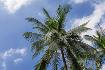 Tropical exotic perfect palm trees in front of sky
