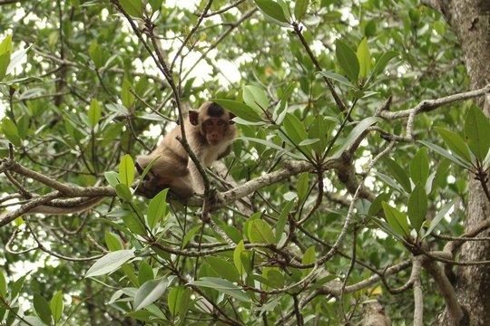 monkey island, vietnam, can gio