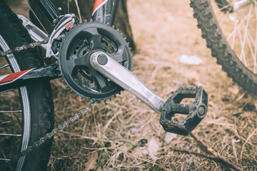 Bicycle pedal on forest background.