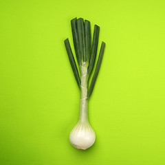 Food background onion flat lay pattern, onion on green background, top view.