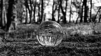 Photo Sphere Crystal Ball Magnifying and Reflecting woodland countryside scene
