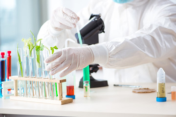Male biochemist working in the lab on plants