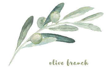Watercolor illustration with olive branch